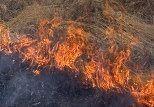Тысяча человек тушат пожар под Волгоградом