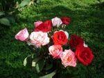 Роза – к любви, астра – к печали