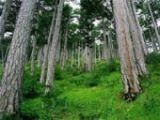 Во Фроловском районе лесной пожар уничтожил 2,5 гектара сосны