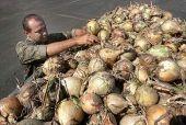 В регионе совершенствуется стратегия развития овощеводства