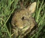 В регионе активизировалась борьба с браконьерством