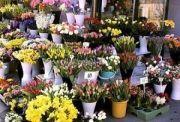 На Центральной набережной пройдет выставка цветов