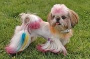 У собак и кошек в Михайловке появились персональные парикмахеры
