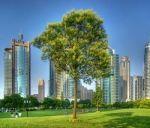 Деревья в Волгограде гибнут от налогов