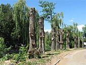 Власти Волгограда намерены сохранить Сурский сквер