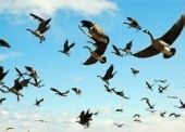 Волгоградцев научат любить птиц