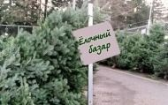 В Волгограде открыты первые елочные базары