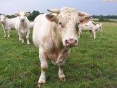 В Жирновском районе реконструируется животноводческая ферма
