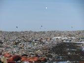 Волгоградскую область очистят от пестицидов и агрохимикатов