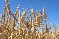 Анатолий БРОВКО: «Я за то, чтобы многоотраслевых хозяйств у нас было больше»