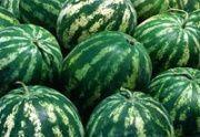 Отгружены первые 400 тонн овощей нового урожая