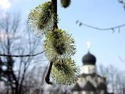 Под Волгоградом грудной ребенок умер на кладбище накануне Вербного воскресенья