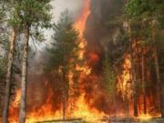 Двум районам Волгоградской области угрожают пожары