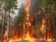 Под Волгоградом выгорел сосновый лес