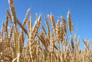 Сельхозпредприятие подало в суд на страховую компанию