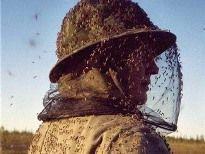 В Волгограде массово уничтожают комаров