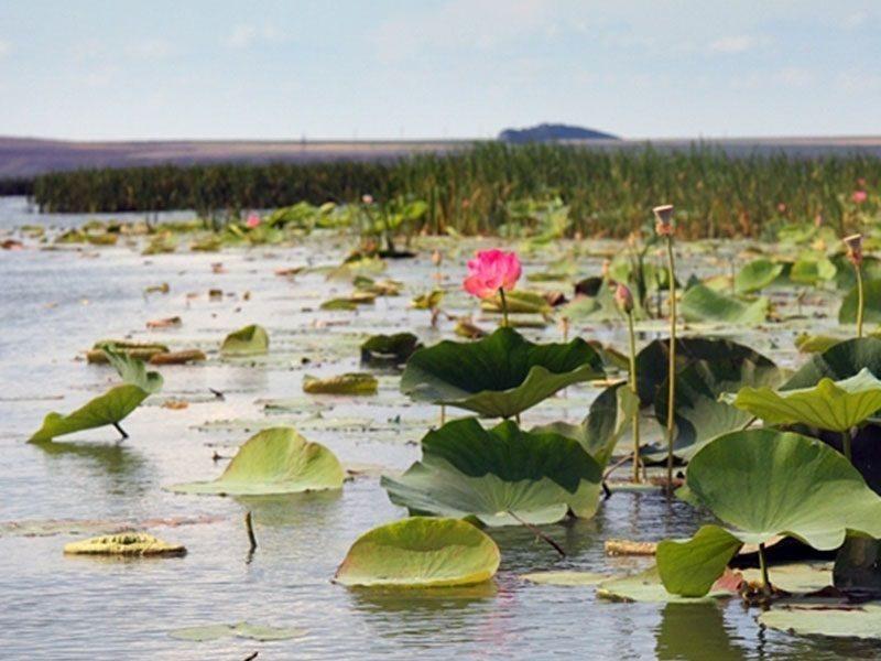Уникальное озеро лотосов погубили любопытные туристы