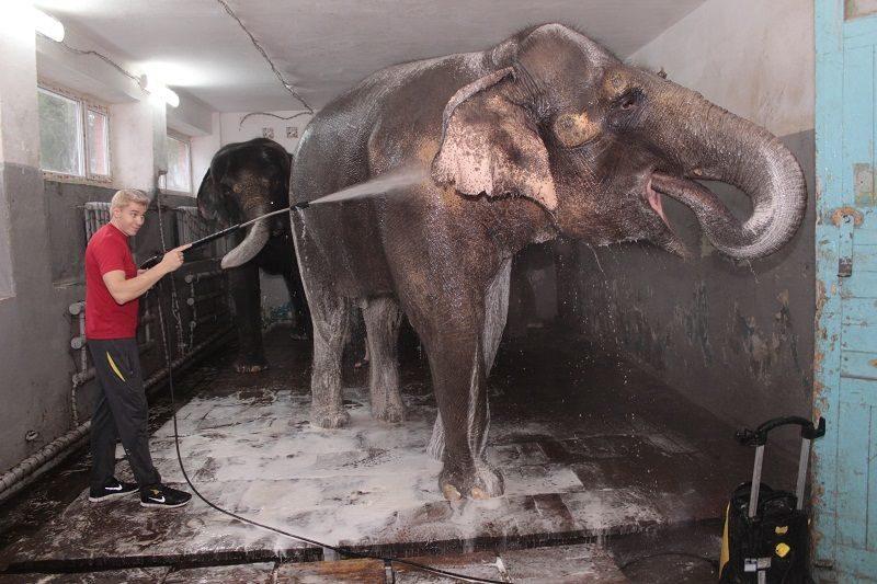 В Волгограде слонам устроили водные процедуры