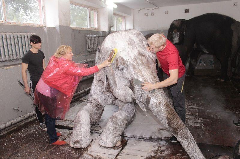 slon 2