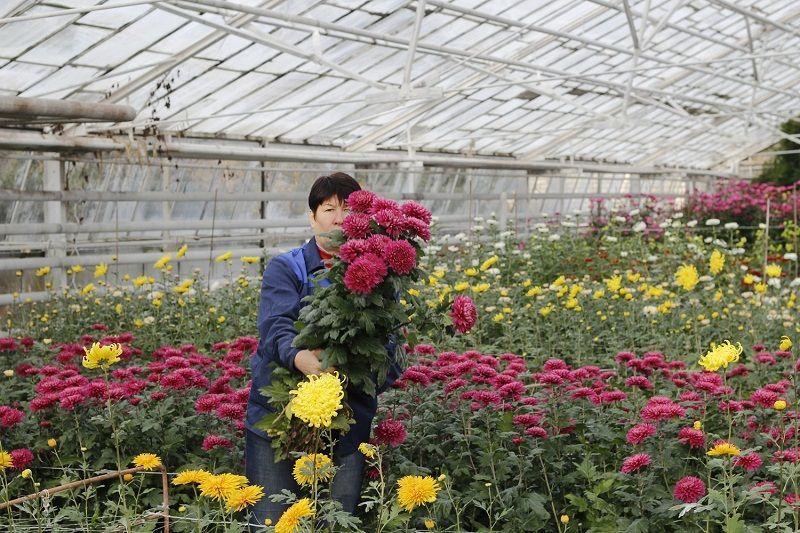 Волгоградский ботанический сад букет, букеты минск доставка