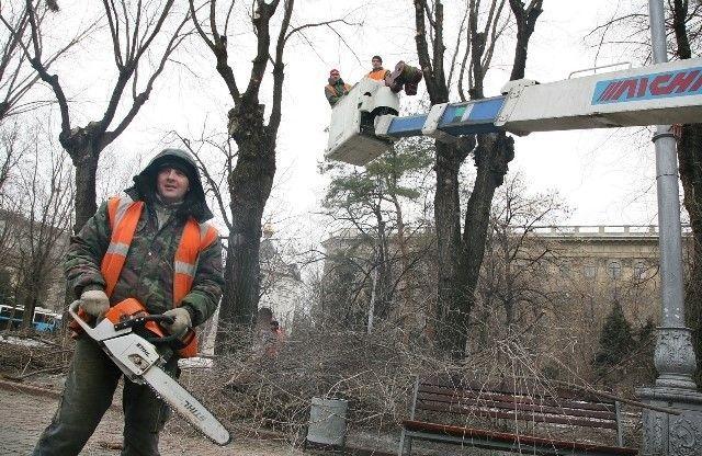 В выходные центральные улицы Волгограда перекроют для обрезки деревьев