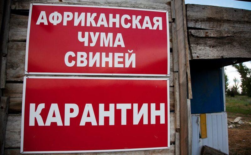 В Руднянском районе под Волгоградом сняли карантин по АЧС