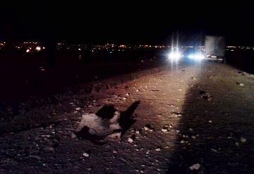 В Волгограде внедорожник сбил пешеходов и скрылся: 2 человека погибли