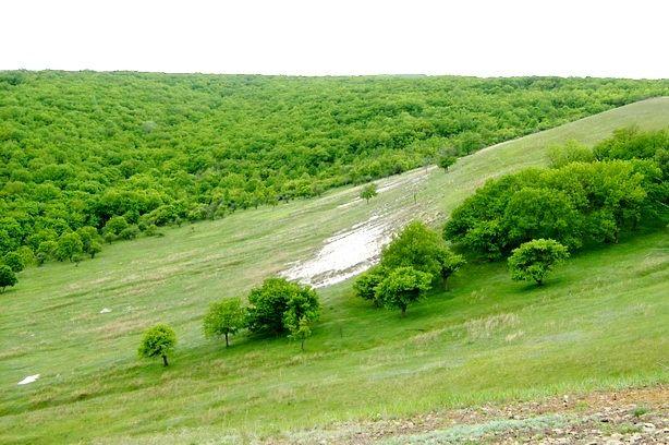 В Волгоградской области по иску прокуратуры из незаконного владения истребованы земли природного парка