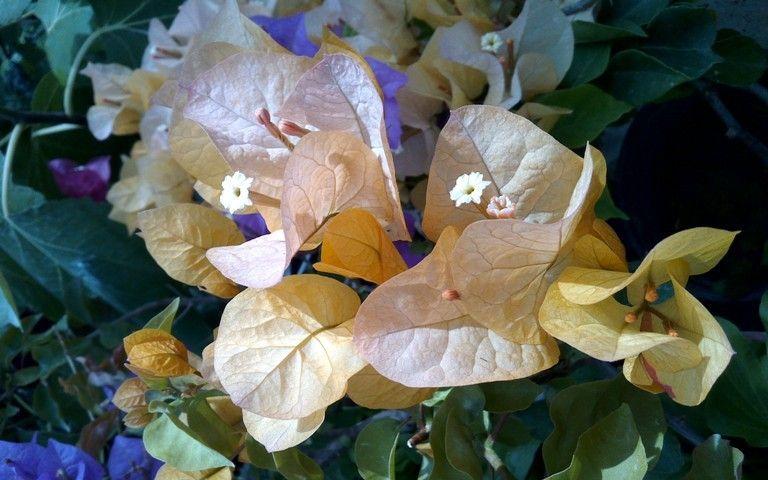 В Волгоградском региональном ботаническом саду появилась экзотическая лиана