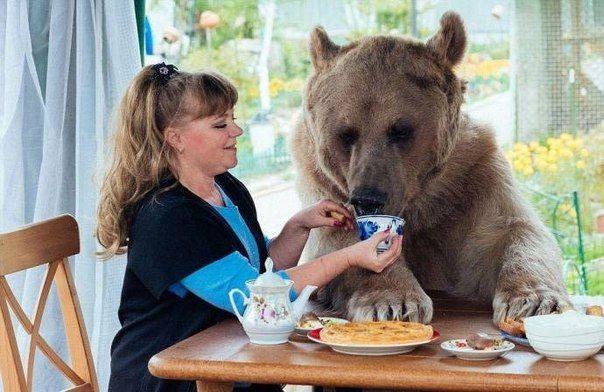 Русская семья на протяжении 23-х лет воспитывает знаменитого медведя Степана