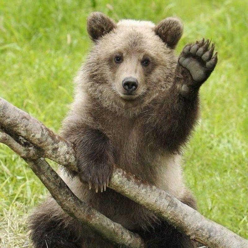 В одном из гаражных кооперативов сотрудники полиции обнаружили медвежонка