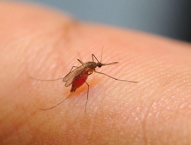 Волгоградцам для профилактики лихорадки Западного Нила рекомендуют использовать репелленты