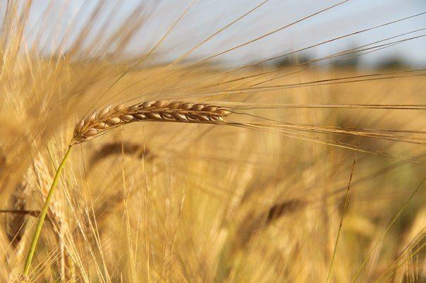 В Волгоградской области фермер и страховщик подозреваются в мошенничестве при получении субсидий