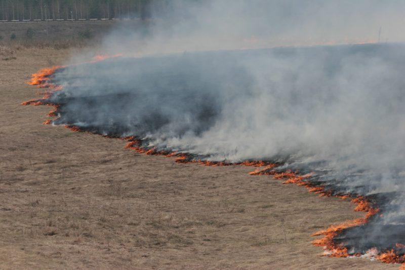 Чиновники скрыли крупный пожар в Калачевском районе