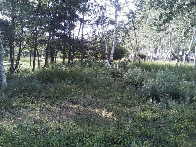 Заблудившуюся в лесу девушку около месяца назад, нашли живой