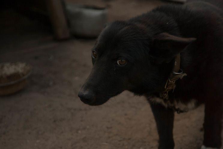 В центре Волгограда планируется отлов бродячих собак