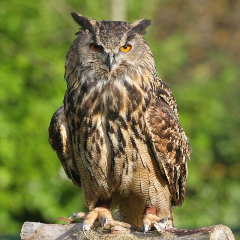 В Приэльтонье обнаружили три гнезда редких филинов