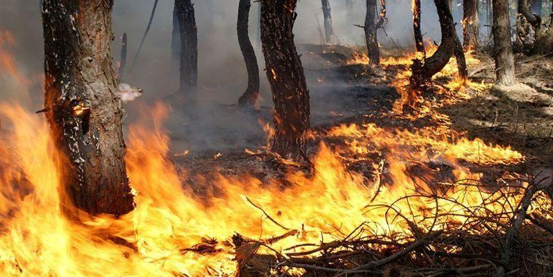 В Волгограде ожидается высокая пожароопасность