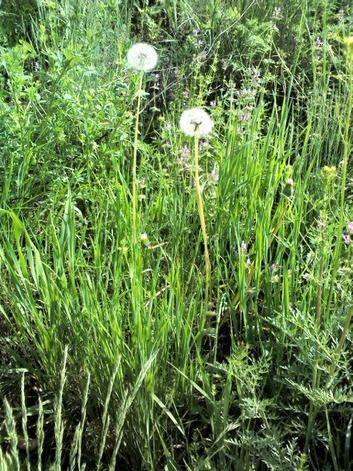 В Городищенском районе сельскохозяйственные поля зарастают сорняками