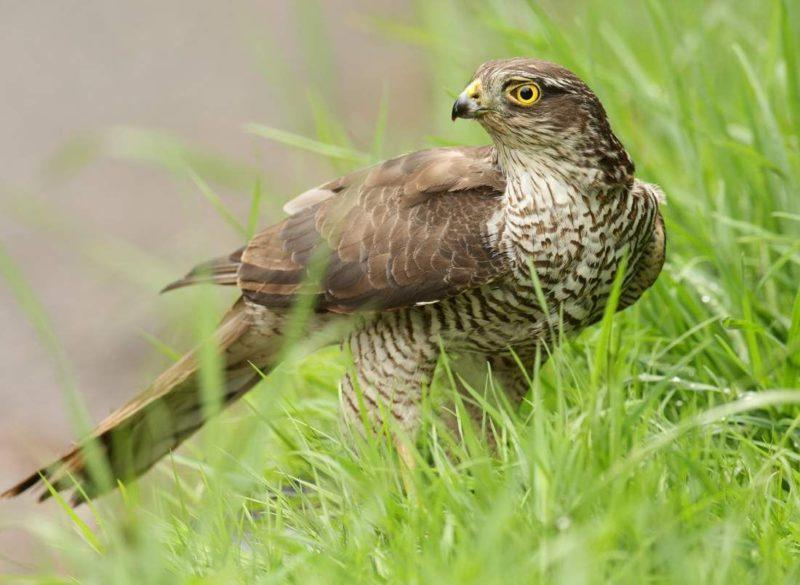 В природном парке под Волгоградом обнаружили гнездо птицы очень редкого вида