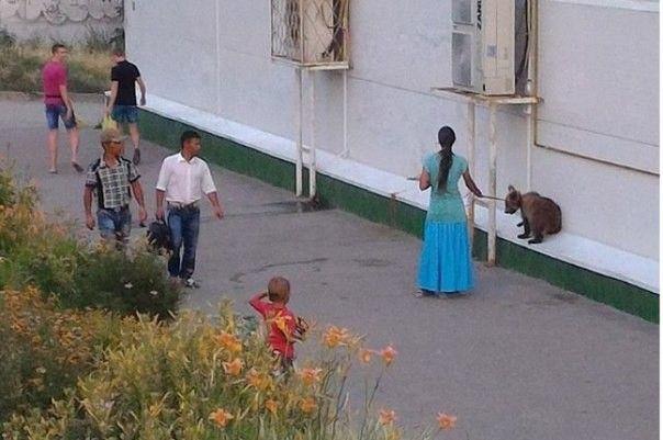 По Волгограду цыганка прогуливалась с медвежонком