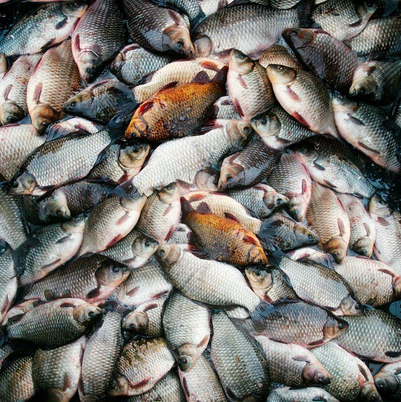 Котельниковский браконьер пытался ловить рыбу с помощью 18 сетей