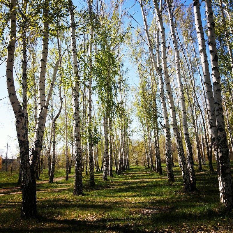 В Волгоградской области до 6 сентября продлили запрет на посещение лесов