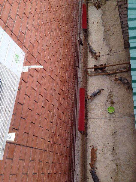 Волгоградка оборудовала собачий питомник из сворованных в супермаркете тележек