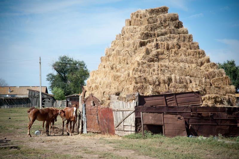 Волгоградские животноводы заготовили к зиме 250 тысяч тонн сена