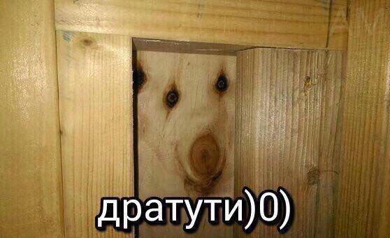 """""""Дратути"""" или как кусок фанеры стал самым популярным изображением в сети"""