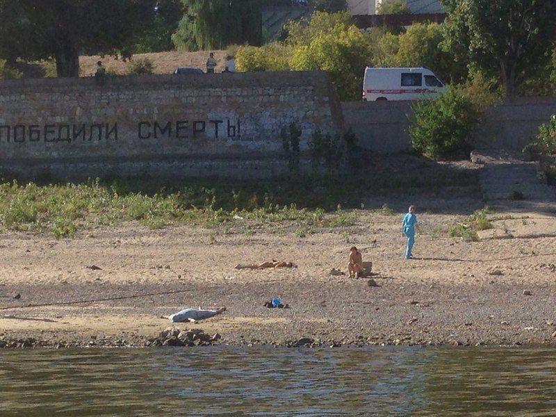Эксперт прокомментировал трагедию у стены Родимцева