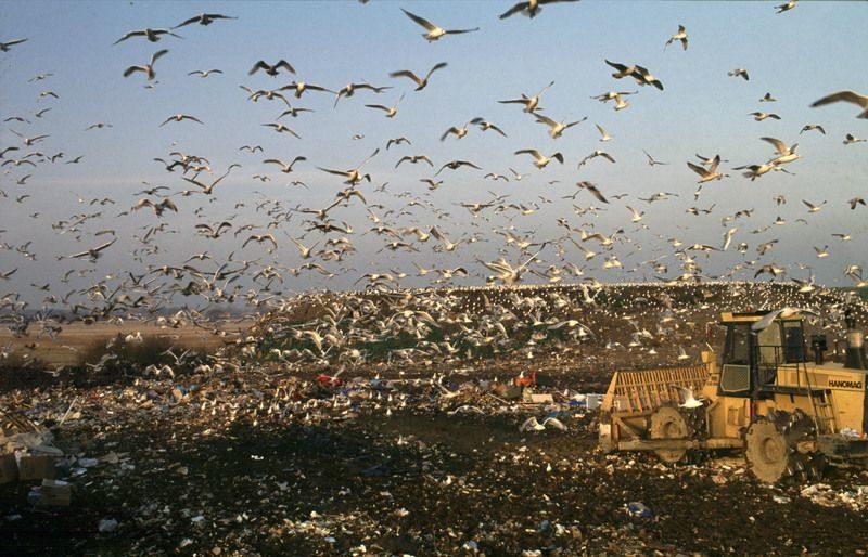 За прошедшую неделю в Волгограде убрали больше 100 свалок