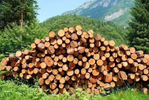 Следователи не нашли доказательств использования рабского труда на лесопилке в Братске