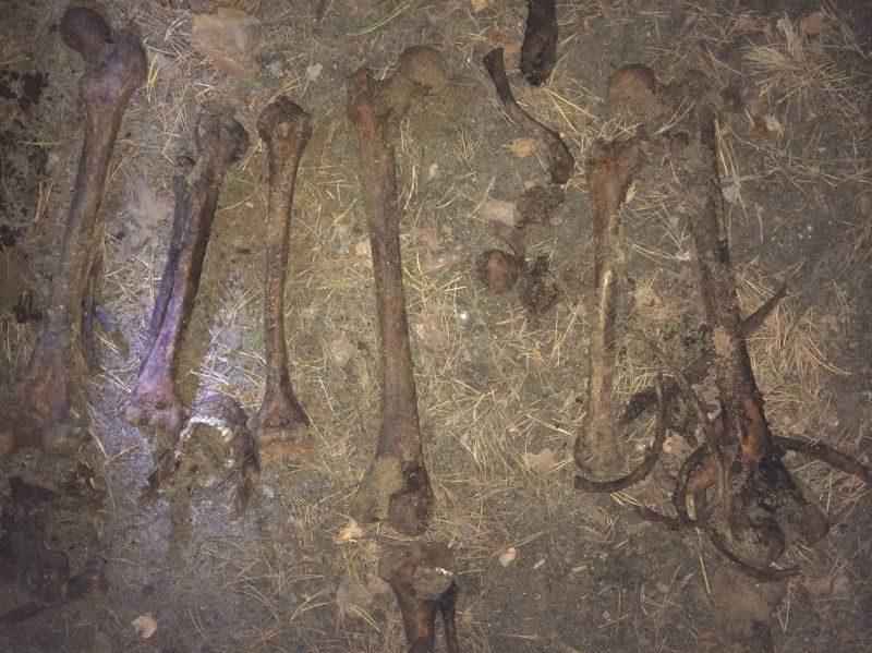 Под Волгоградом обнаружены останки пропавшей в августе пенсионерки